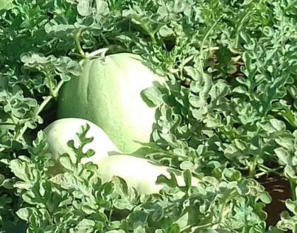 frutos de la tierra